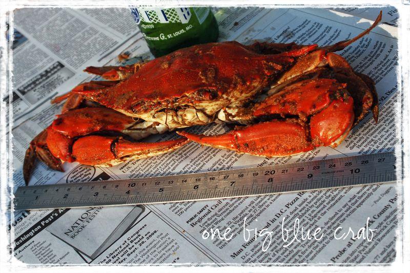 One Big Blue Crab